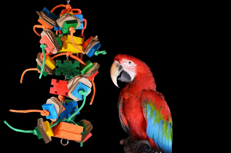 Spielzeug-für-Ihren-Papagei