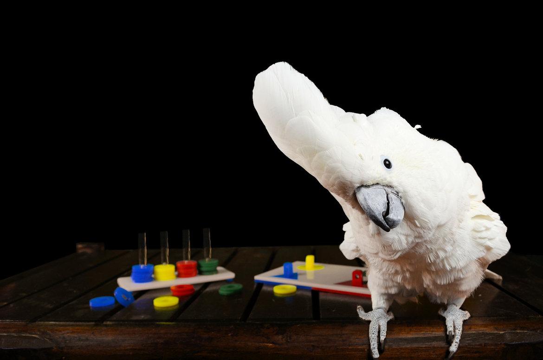 Lern--und-Futterspielzeug