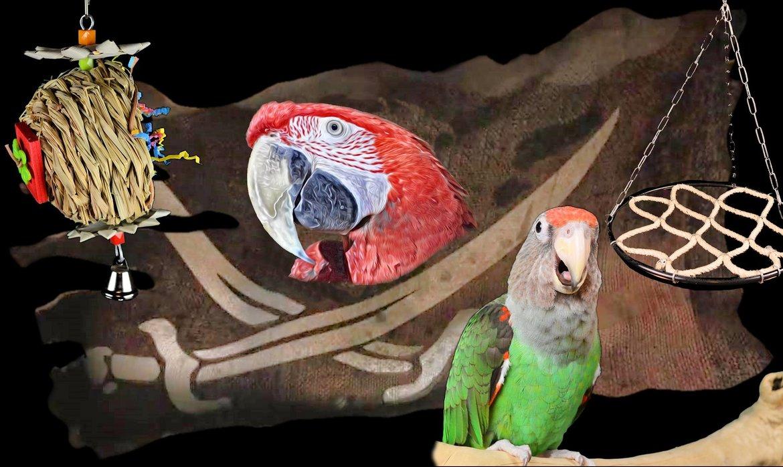 Papageienkäfig-Unterbringung-&-Unterwegs
