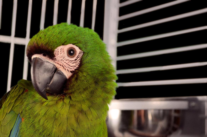 Papageienkäfige