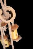 papegaaienspeelgoed - dieca-bamboo toy large 5